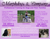 Murphdog(R) & Company Dog Training