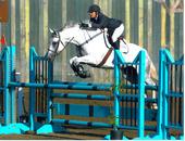 Silverwood Equestrians