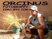 Orcinus Fotograffy