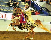 Zukowski Meadowview Farms Arabians
